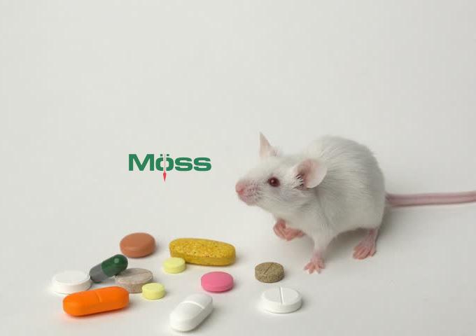 Chuột là một con vật có ý nghĩa với ngành y tế