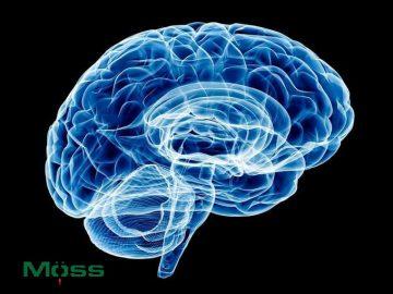 Các nếp gấp protein trong não rất quan trọng