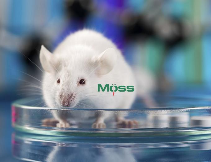 Thử nghiệm trên chuột đã cho thấy kết quả khả quan