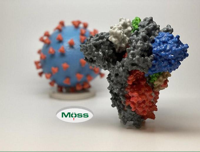 Cấu trúc, đặc điểm của coronavirus mới đã được nghiên cứu kỹ lưỡng
