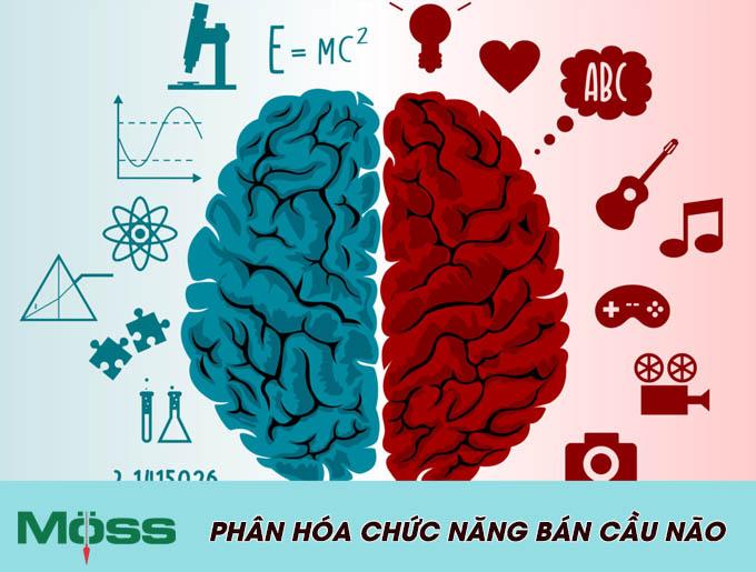 Não trái và não phải giữ các chức năng khác nhau